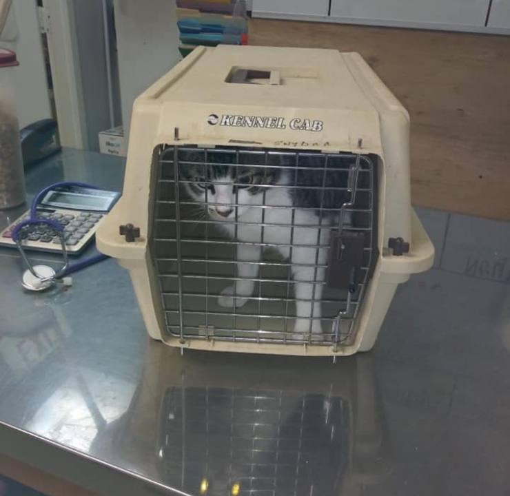 gatto abbandonato natale trasportino