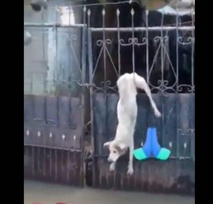 cane incastrato recinzione alluvione