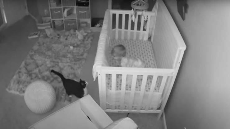gatta entra stanza bambino