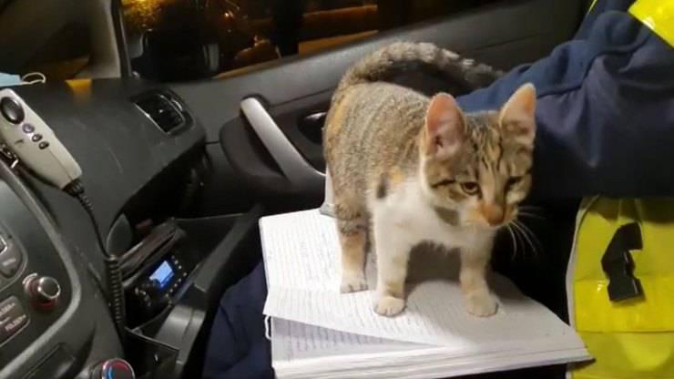gatto entra auto polizia