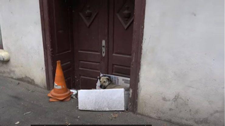 cagnolina randagia scatolo cartone