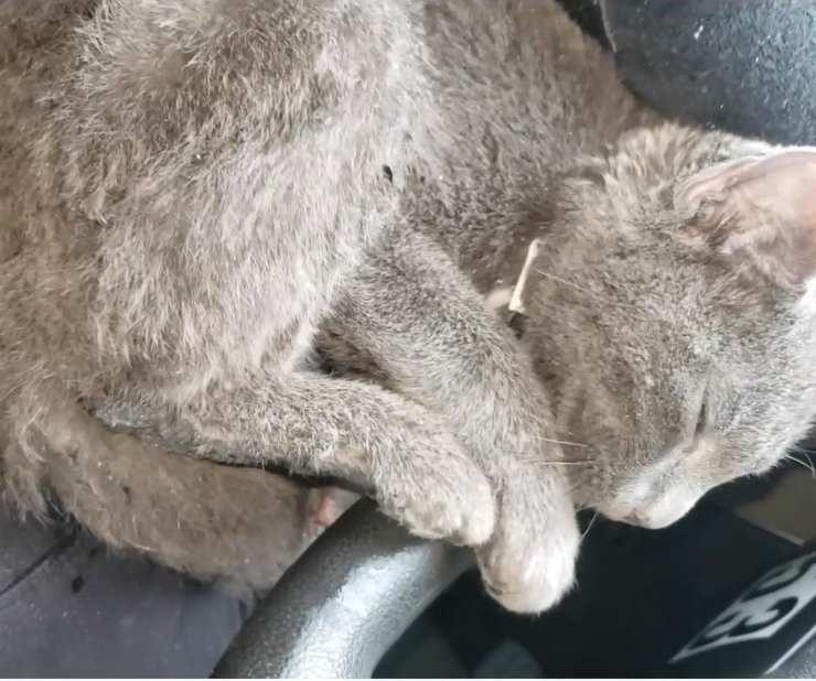 gattino salvato fusa