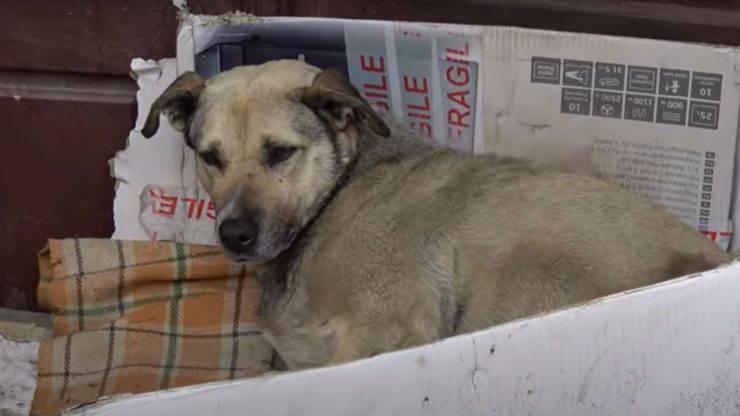 cane cuccia cartone salvata turista