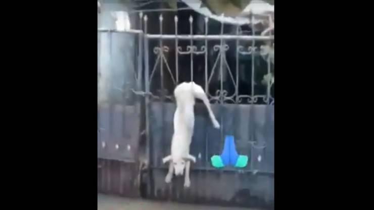 cane appeso cancello alluvione