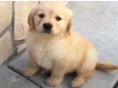 Il cucciolo spione (Foto video)