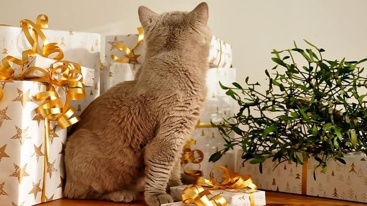 regali natale amanti dei gatti