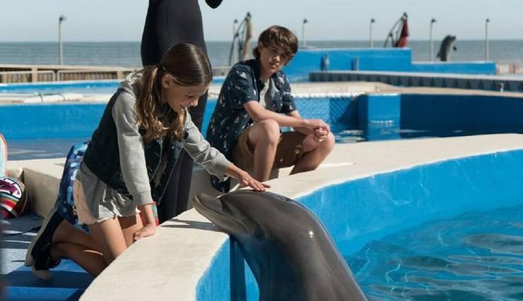 film con delfini