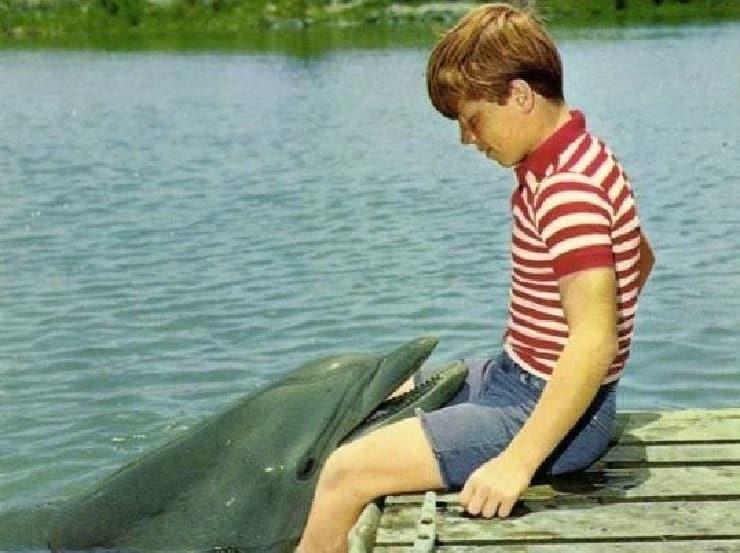 flipper film delfino