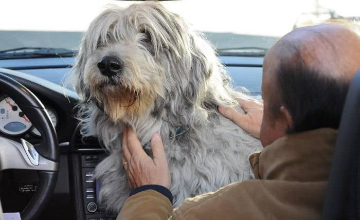 boldi cane spartaco