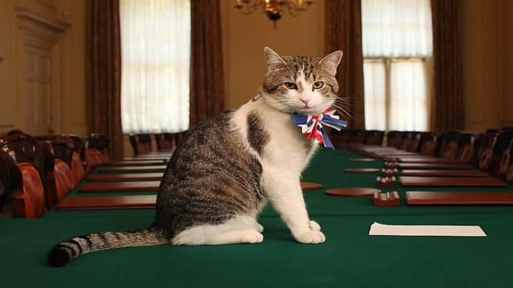 Il gatto Larry