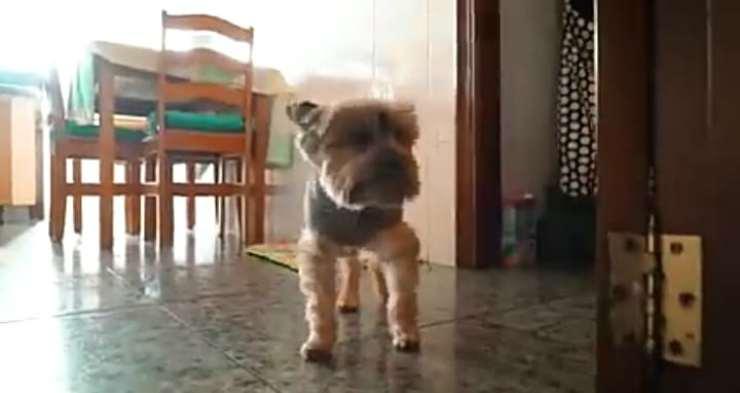 Finalmente la felicità (foto video)