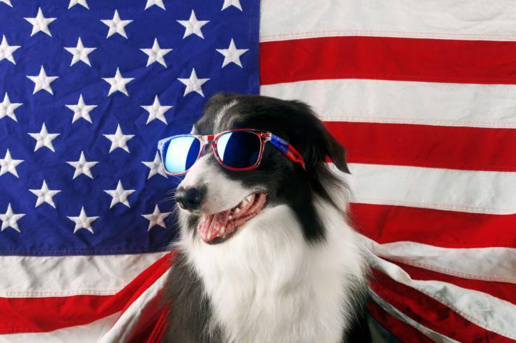Cani più diffusi in America