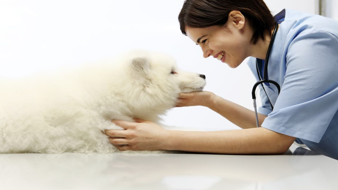 La palatoschisi nel cane