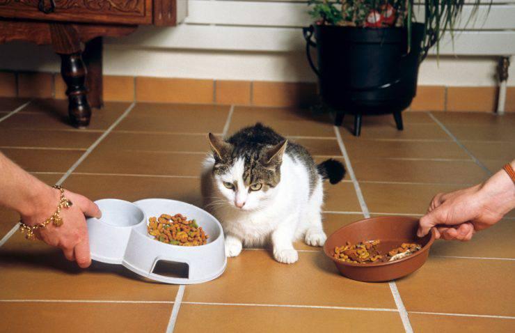 Il gatto mangia le crocchette del cane