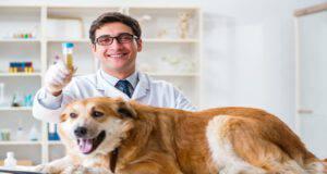 Test delle urine al cane