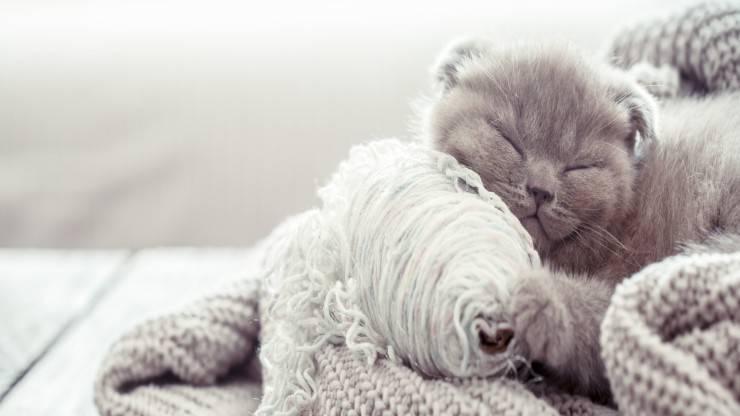 Il pelo del gatto cambia colore in inverno