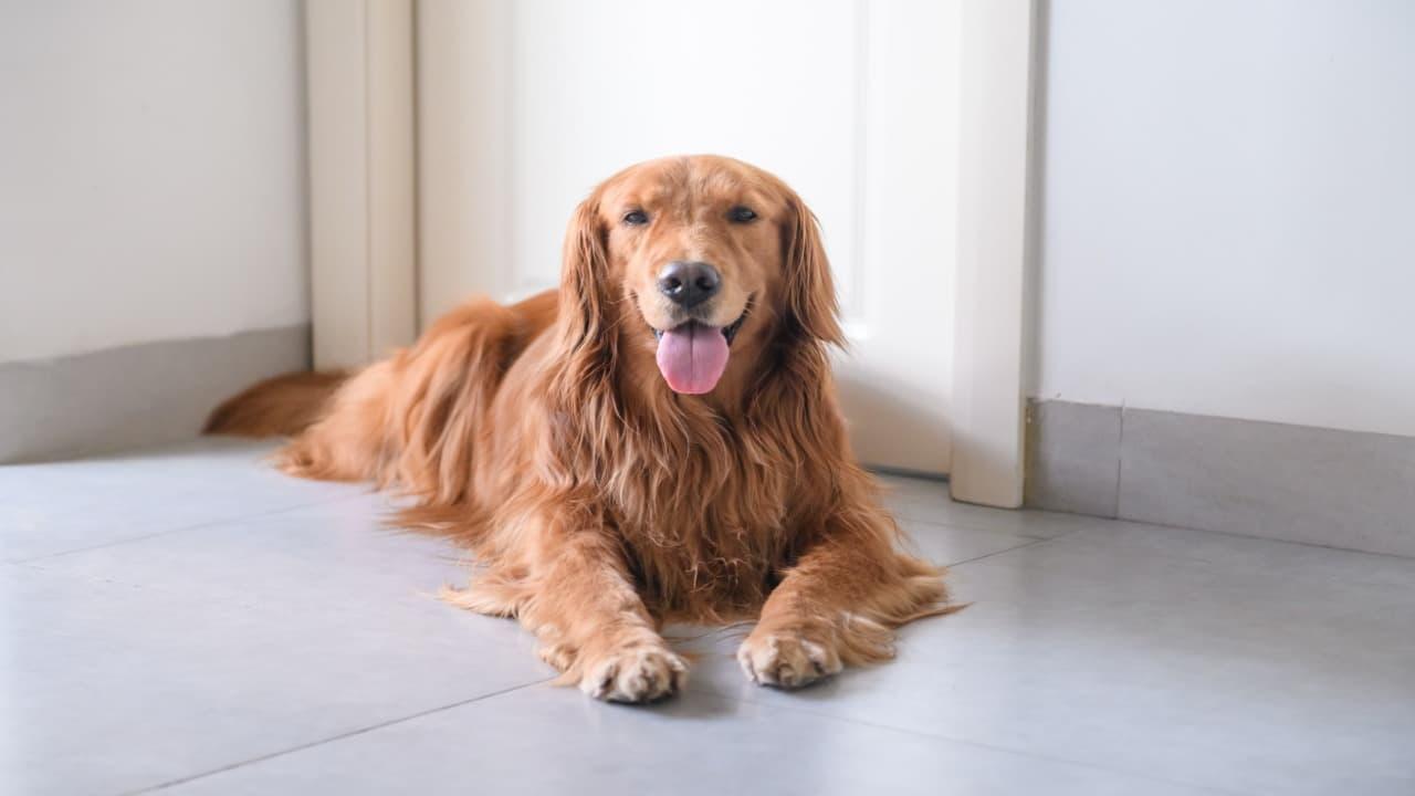 Come migliorare l'autostima del cane