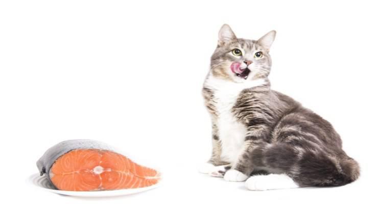 Gli effetti del mercurio sul gatto