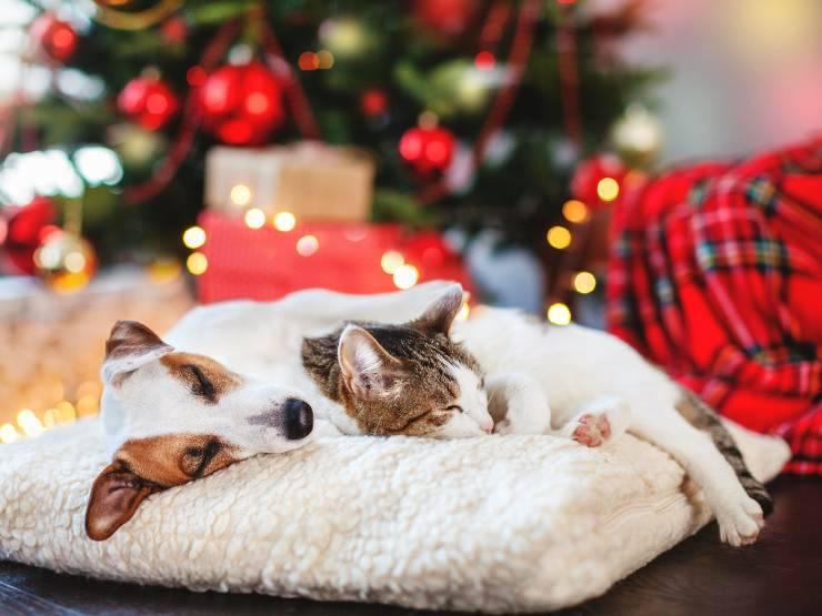 Cane e gatto a capodanno