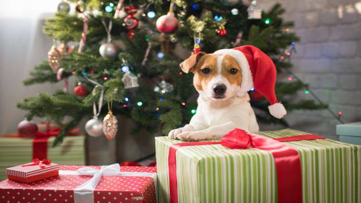 Un cane a Natale sì o no