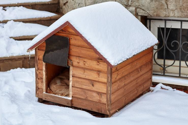 Decorare la cuccia del cane per Natale