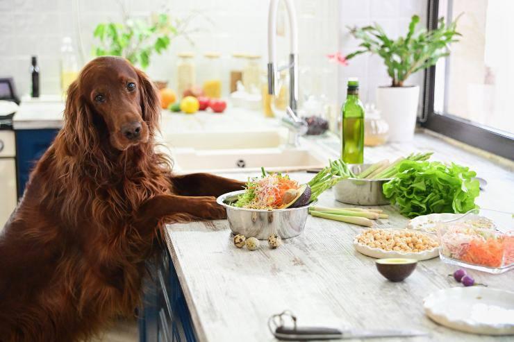 Fido in cucina
