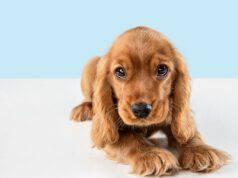 Chi si occupa del cane dopo la morte del proprietario