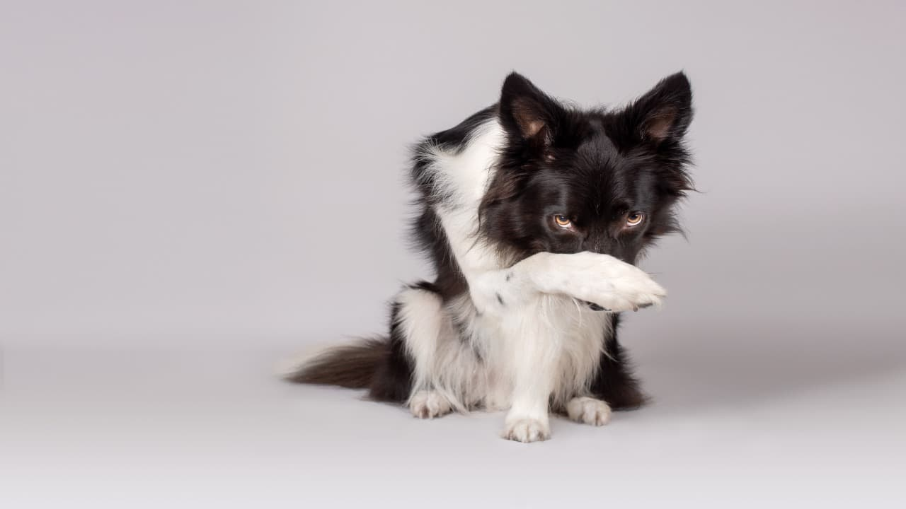 Ordinanze anti-botti a tutela degli animali