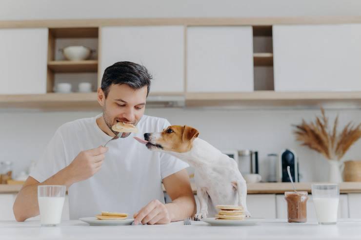 Cane che mangia cibo del padrone