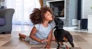 Calmare un cane agitato