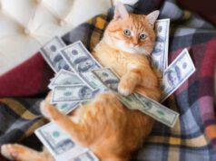 Si può lasciare l'eredità al gatto?