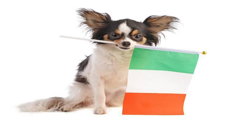 Le prime razze di cani in Europa