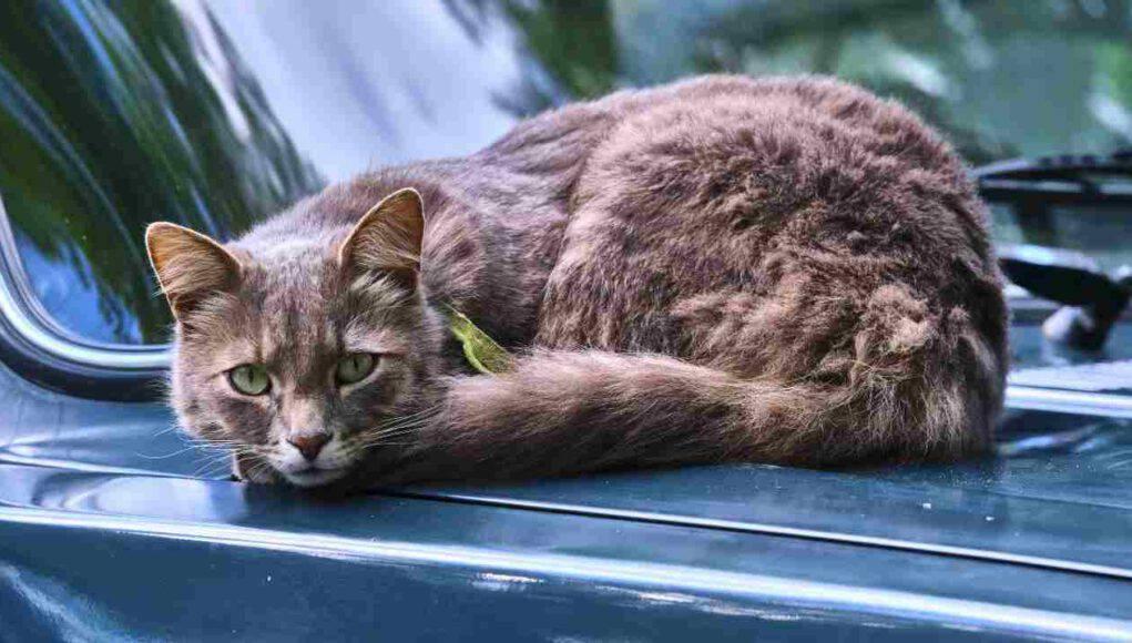 Il gatto ha paura della macchina