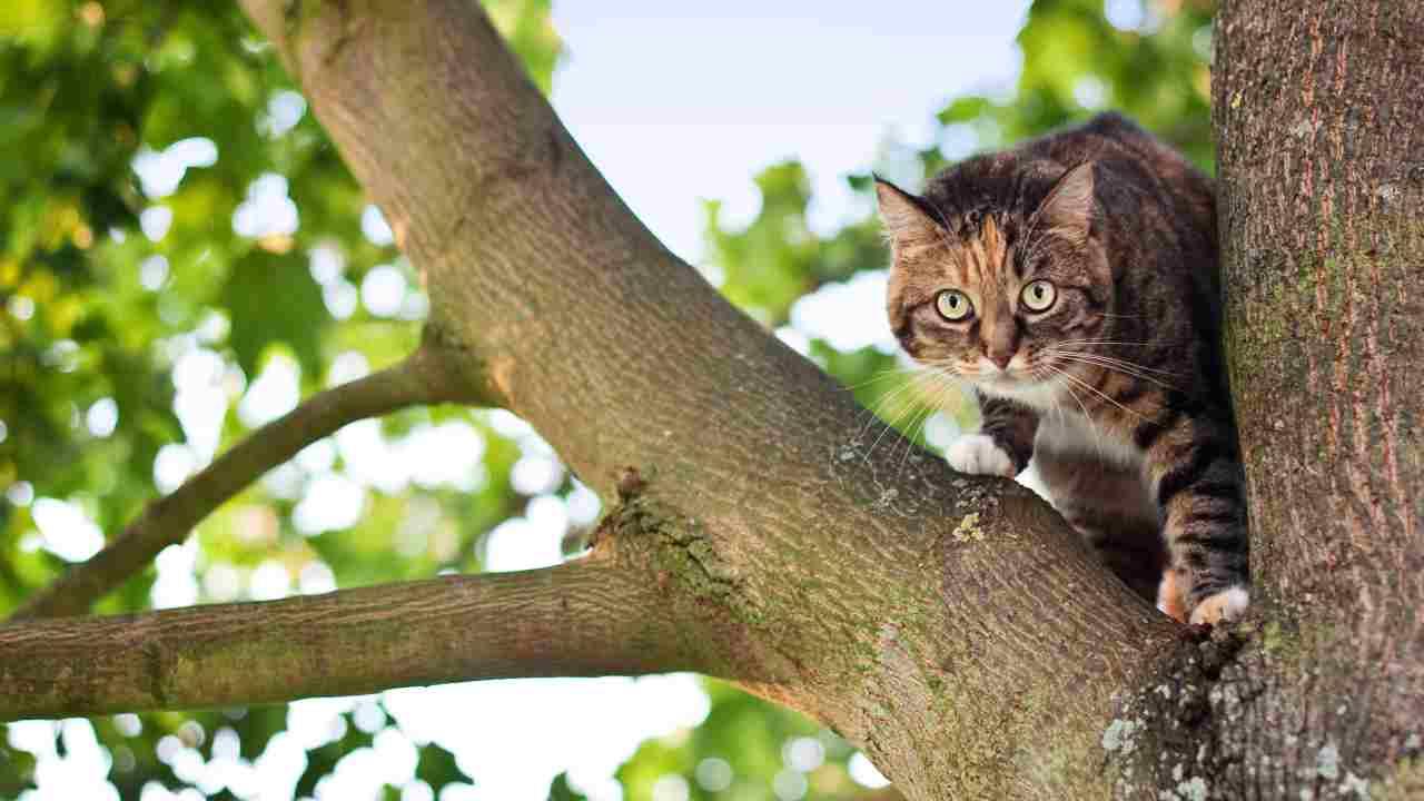 Il gatto ha paura dell'altezza