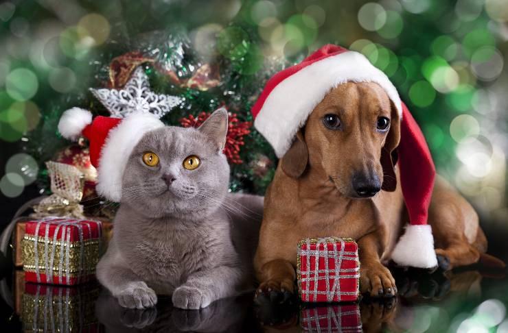 Animali sotto l'albero di Natale
