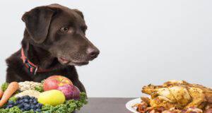 Cambiare la dieta del cane