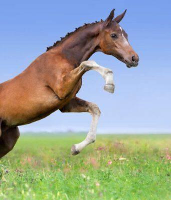 L'importanza del gioco per il cavallo