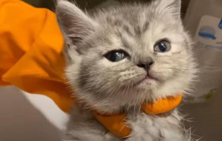 gattino incastrato tubo bagnetto