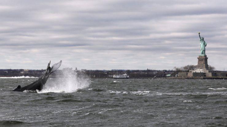 Balene New York Statua Della Libertà