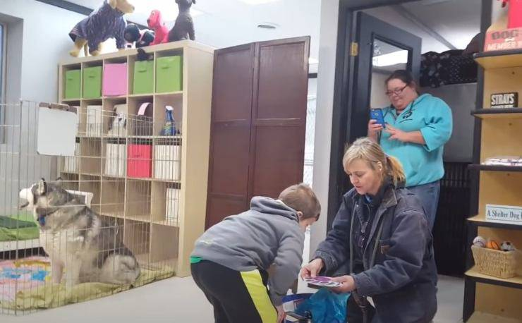 bambino umore aiuta animali abbandonati