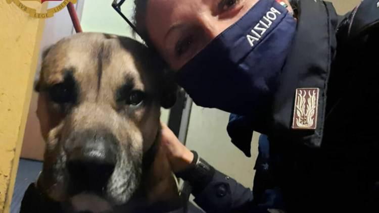 Cane Salvato Polizia Ubriachi Casa