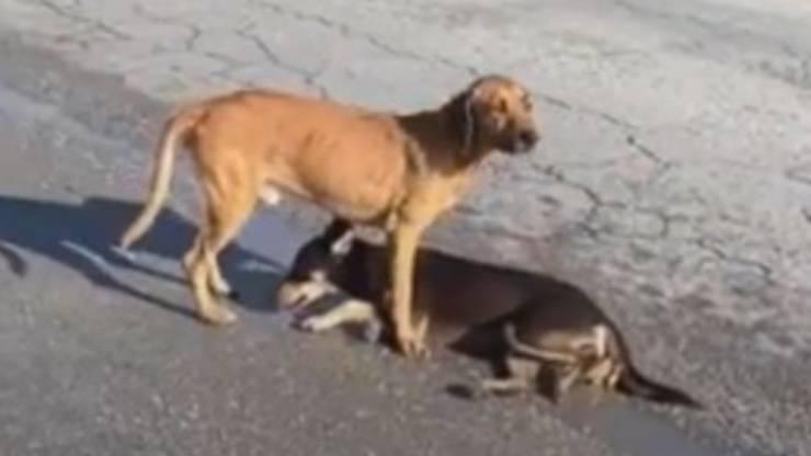Cani Investiti Messico