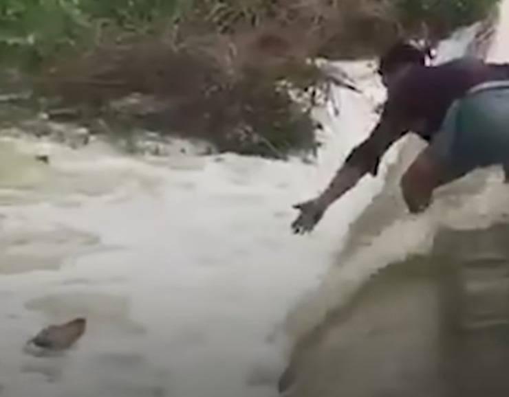 cane cascata