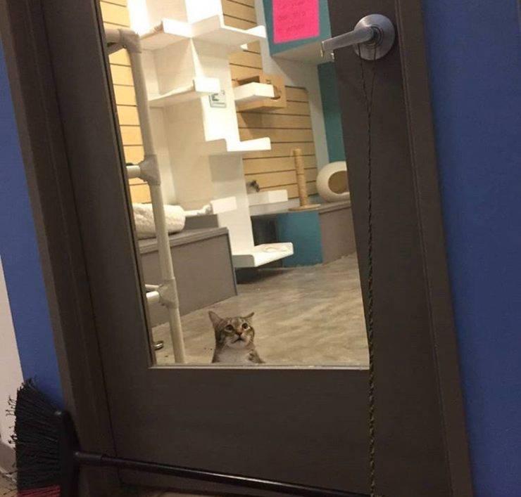 gatto in isolamento rifugio