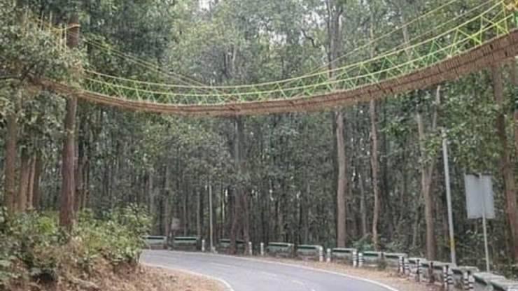 Eco-ponte Animali India Innovazione