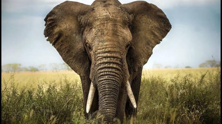 Elefanti Namibia Asta