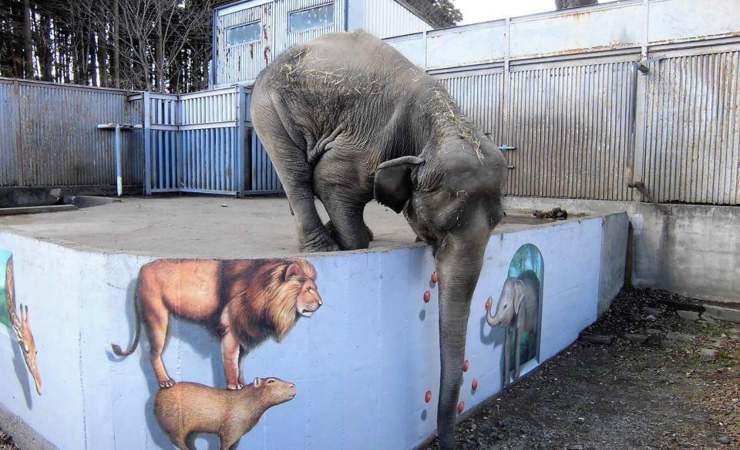 Elefante Zoo Giapponese