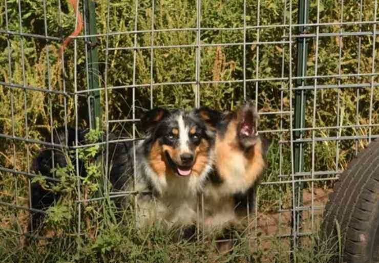 cani animali salvati fattoria incubo