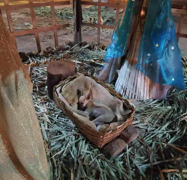 cagnolino riposa mangiatoia natività