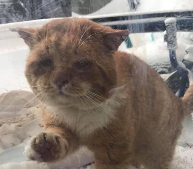 la finestra del gatto chiede aiuto